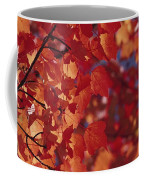 Close-up Of Autumn Leaves Coffee Mug