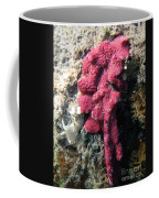 Close-up Of Live Sponge Coffee Mug by Ted Kinsman
