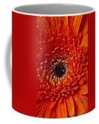 Close Up Orange Mum Coffee Mug
