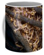 Close-up View Of Basket Stars Feeding Coffee Mug