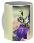 Close View Of A Balloon Flower In Bloom Coffee Mug