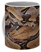 Close View Of A Brightly Patterned Boa Coffee Mug