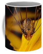 Close View Of A Daddy Longlegs Coffee Mug by Darlyne A. Murawski