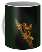 Close View Of A Harlequin Tree Frog Coffee Mug by Tim Laman