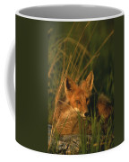 Close View Of A Red Fox At Rest Coffee Mug