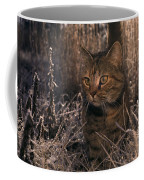 Close View Of A Tabby Cat Coffee Mug