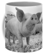Close View Of A Young Pig In A Snowy Coffee Mug
