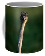 Close View Of An Ostrich Struthio Coffee Mug