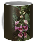 Close View Of Blooming Foxglove Coffee Mug by Sam Abell