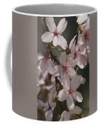 Close View Of Cherry Blossoms Coffee Mug