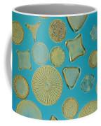 Close View Of Diatoms Coffee Mug