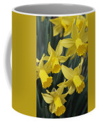 Close View Of Early Spring Daffodils Coffee Mug