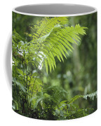 Close View Of Ferns In A Papua New Coffee Mug