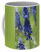 Close View Of Grape Hyacinth Flowers Coffee Mug