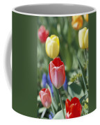 Close View Of Spring Tulips In Bloom Coffee Mug