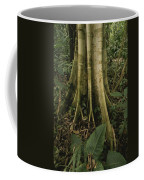Close View Of Tree Roots In A Rain Coffee Mug by Michael Melford