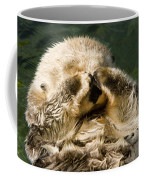 Closeup Of A Captive Sea Otter Covering Coffee Mug