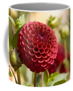 Closeup Of A Red Flower In Butchart Coffee Mug