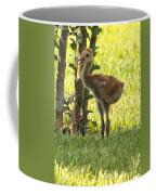 Closeup Of Sandhill Baby Coffee Mug