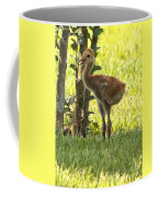 Closeup Of Sandhill Baby Coffee Mug by Carol Groenen