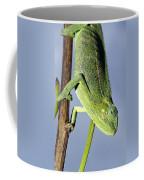 Closeup Of The Head Of A Montane Coffee Mug