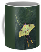Closeup Of Unique Butterfly Coffee Mug