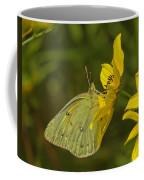 Clouded Sulphur Butterfly Din099 Coffee Mug