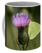 Cloudless Sulfur Butterfly On Bull Thistle Wildflower Coffee Mug
