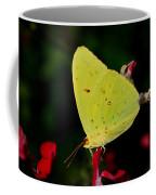 Cloudless Sulphur Coffee Mug