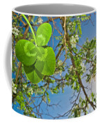 Clover And Sunflare 1 Coffee Mug by Amber Flowers