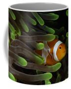 Clownfish In Green Anemone, Indonesia Coffee Mug