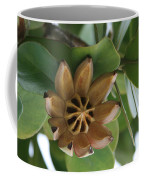 Clusia Major -  Autograph Tree Coffee Mug
