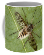 Cluster Fly Killed By Parasitic Fungus Coffee Mug
