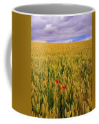 Co Waterford, Ireland Poppies In A Coffee Mug