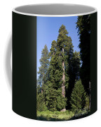 Coast Redwood Coffee Mug