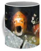 Cocky Catskills Koi Coffee Mug