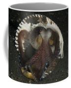 Coconut Octopus In Shell, North Coffee Mug