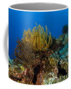 Colony Of Crinoids, Papua New Guinea Coffee Mug