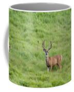 Colorado Deer Coffee Mug