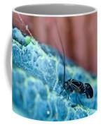 Colorful Psocid 1 Coffee Mug