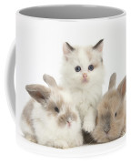 Colorpoint Kitten With Baby Rabbits Coffee Mug