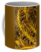 Commensal Shrimp Coffee Mug