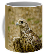 Common Female Kestrel Coffee Mug
