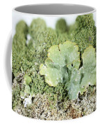 Common Greenshield Lichen Coffee Mug by Ted Kinsman