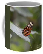 Common Tiger Glassywing Coffee Mug