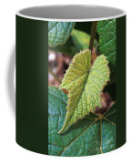 Concord Grape Plant Coffee Mug by Science Source
