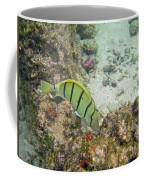 Convict Tang Manini P1060089 Coffee Mug