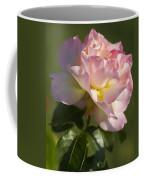 Cotton Candy Pink Peace Rose Coffee Mug
