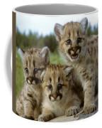 Cougar Cubs On A Rock Coffee Mug