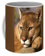 Cougar Relaxing. . . Coffee Mug